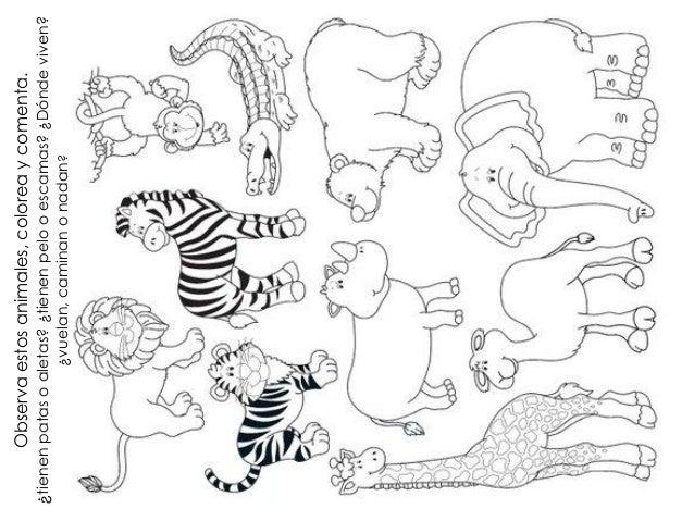 Planeacion en que se parecen los animales