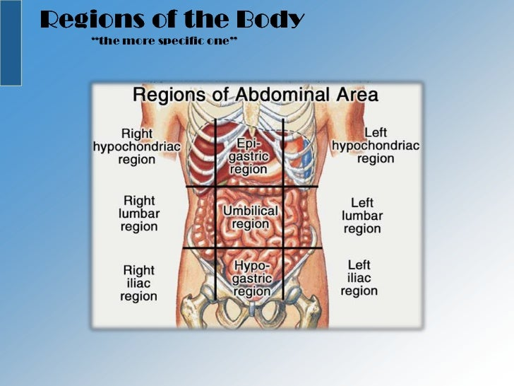 Royalty Free Stock Photography Lung Pleura Pleural Cavity Image26835277 together with 163 Ch 09lecturepresentation likewise YW5hdG9taWNhbCBwbGFuZXM furthermore Lecture12 4 13 together with Chapter 1 Organization Of The Human Body. on 9 of the body cavities