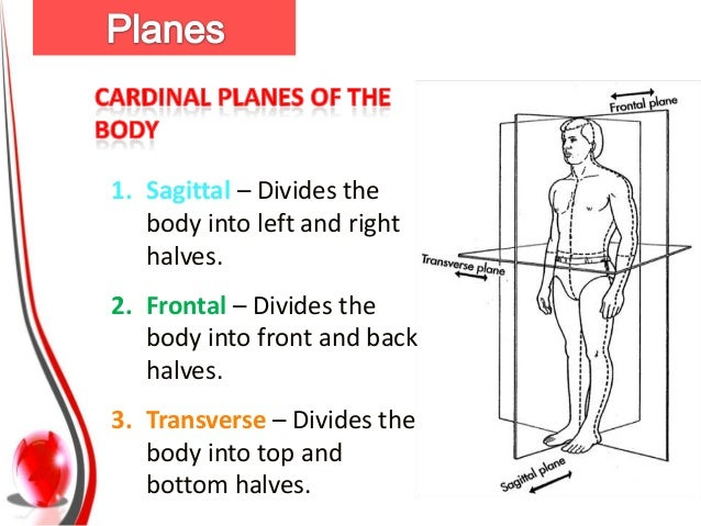 Anatomical Planes And Axis Of Movement