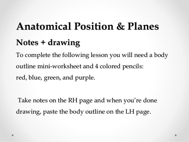 Planes of thebody – Anatomical Position Worksheet