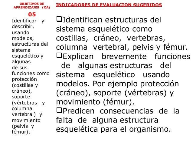OBJETIVOS DE     INDICADORES DE EVALUACION SUGERIDOSAPRENDIZAJES (OA)      05Identificar y       Identifican estructuras ...