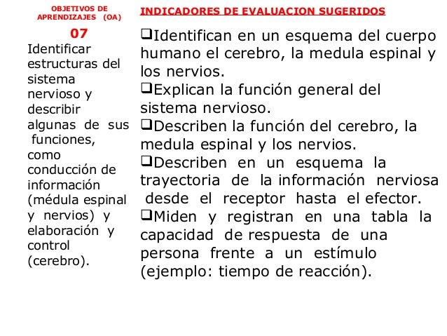 OBJETIVOS DE     INDICADORES DE EVALUACION SUGERIDOS APRENDIZAJES (OA)        07           Identifican en un esquema del ...