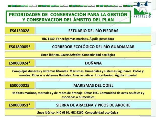 PRIORIDADES DE CONSERVACIÓN PARA LA GESTIÓN Y CONSERVACION DEL ÁMBITO DEL PLAN ES6150028ES6150028 ESTUARIO DEL RÍO PIEDRAS...