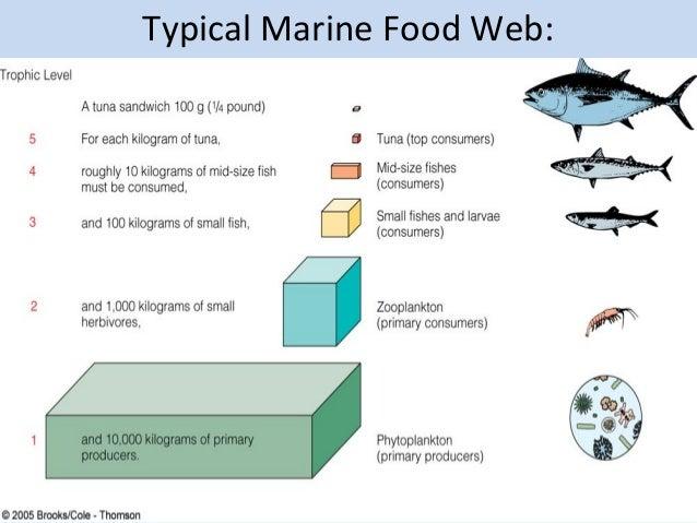 Plankton Food Chain