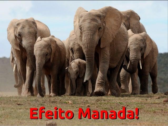 Efeito Manada!Efeito Manada!