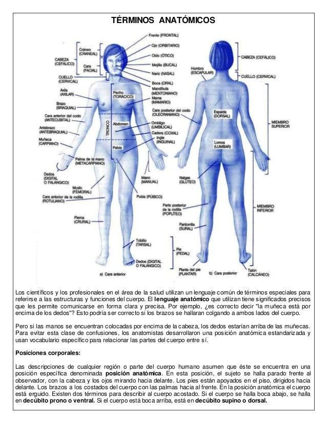 Planos anatómicos y términos anatómicos