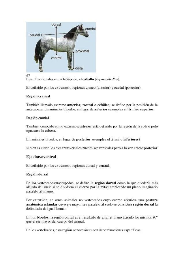 Planos descriptivos de la anatomía veterinaria