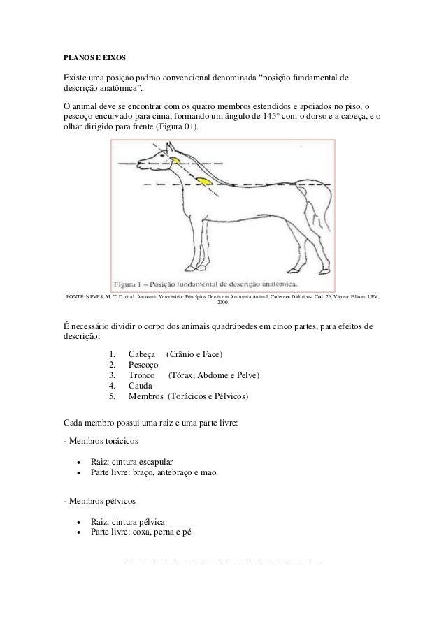 """PLANOS E EIXOS Existe uma posição padrão convencional denominada """"posição fundamental de descrição anatômica"""". O animal de..."""