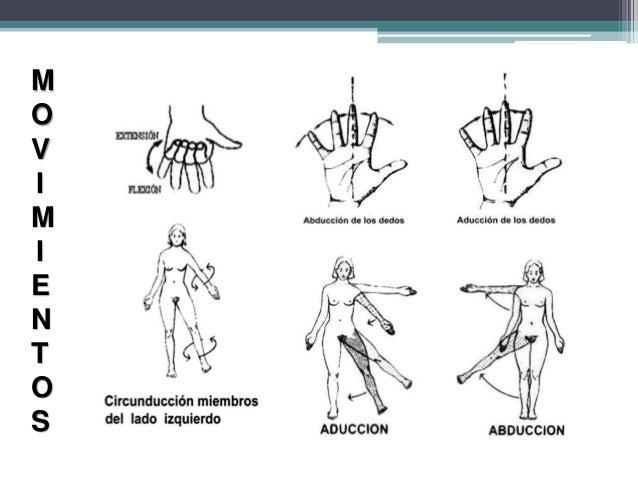 Ejes planos y movimientos corporales pdf