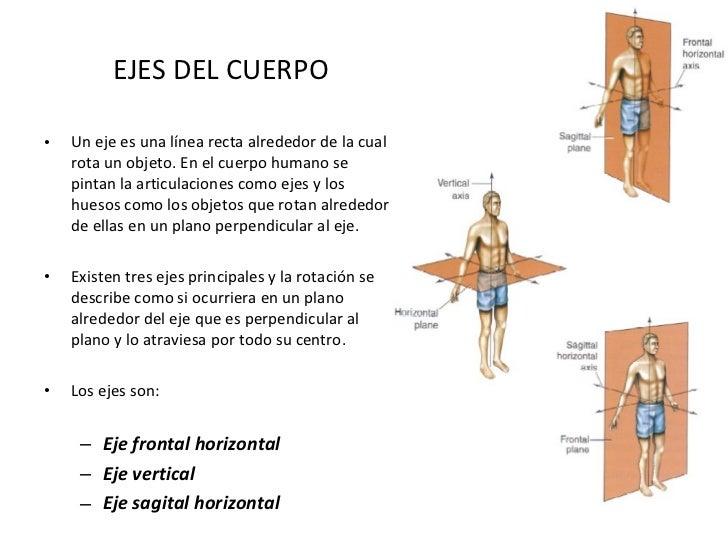 Planos y ejes del cuerpo humano