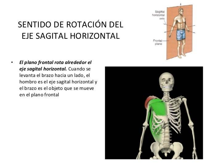 SENTIDO DE ROTACIÓN DEL EJE SAGITAL HORIZONTAL <ul><li>El plano frontal rota alrededor el eje sagital horizontal.  Cuando ...