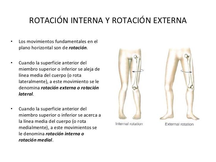 Fantástico Eje De La Anatomía De Rotación Adorno - Anatomía de Las ...