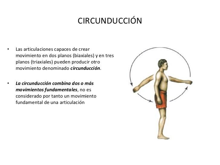 CIRCUNDUCCIÓN <ul><li>Las articulaciones capaces de crear movimiento en dos planos (biaxiales) y en tres planos (triaxiale...