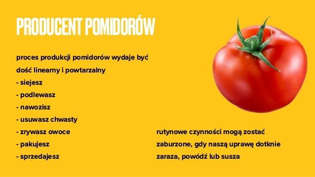 PRODUCENTPOMIDORÓW proces produkcji pomidorów wydaje być dość linearny i powtarzalny - siejesz - podlewasz - nawozisz - us...