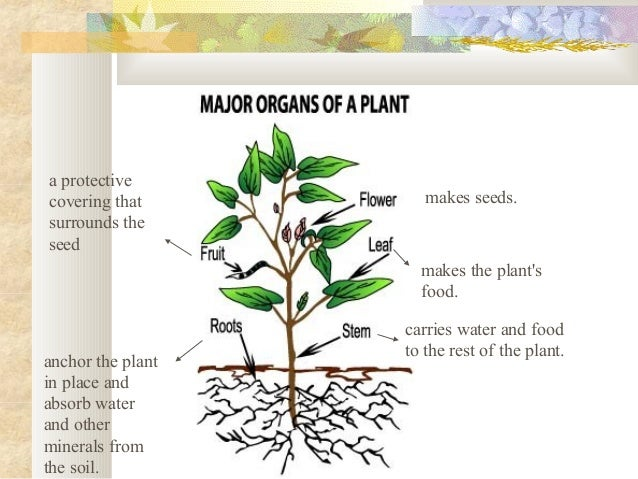 plant structure and function Test and improve your knowledge of plant structure & function with fun multiple  choice exams you can take online with studycom.