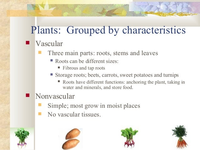 Plants  Structure And Function