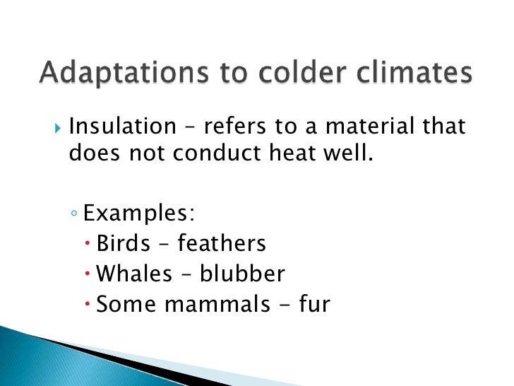 Plant And Animal Adaptation