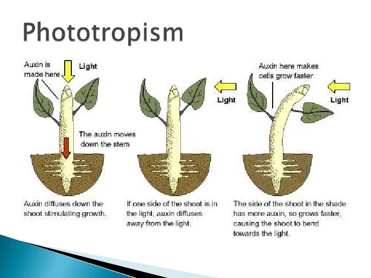 Chemosynthesis and Hydrothermal Vent Life