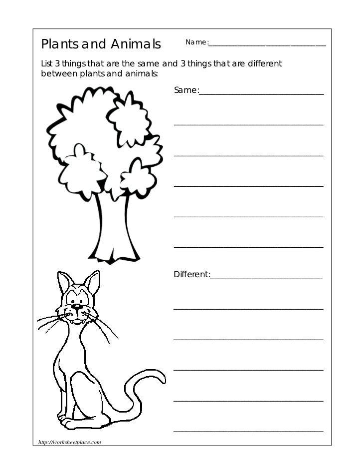 Basic Needs Of Animals Worksheets : Plant and animal needs