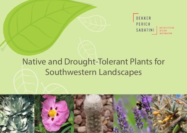 April is Landscape Architecture Month Native and Drought-Tolerant Plants for Southwestern Landscapes