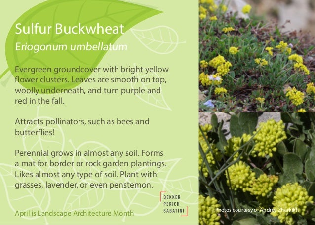 Native And Drought Tolerant Plants For Southwestern Landscapes