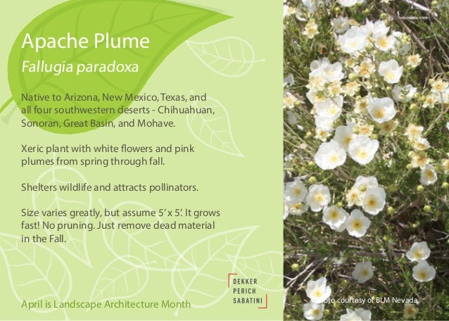 Native and Drought-Tolerant Plants for Southwestern Landscapes Slide 2