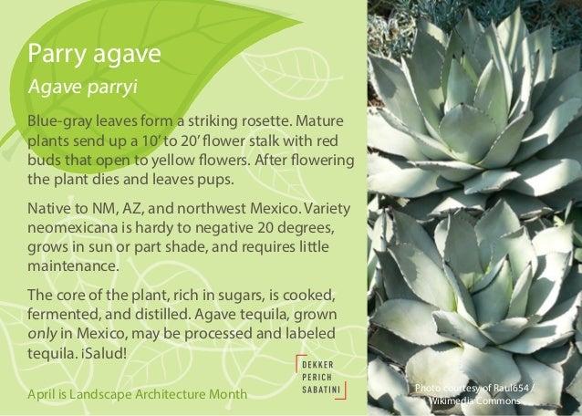 Native and Drought-Tolerant Plants for Southwestern Landscapes Slide 3