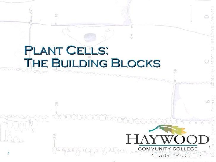 Plant Cells: The Building Blocks
