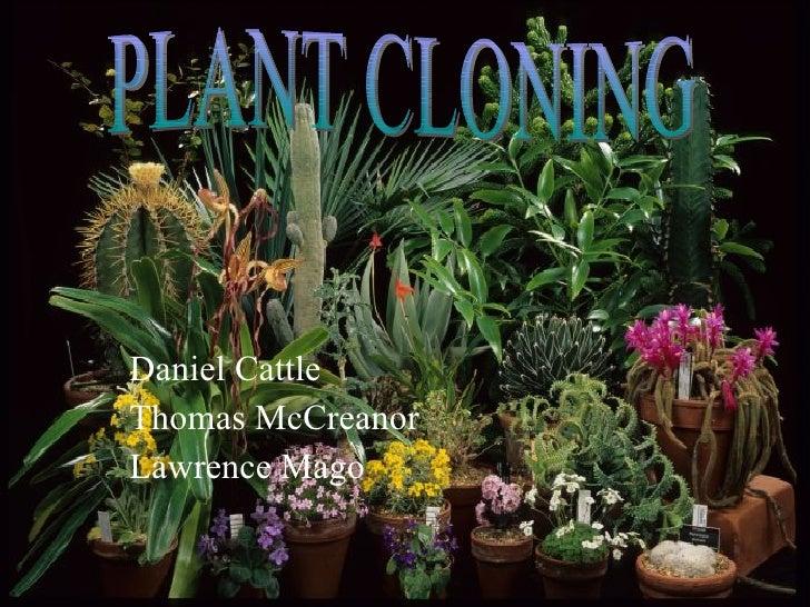 Daniel Cattle Thomas McCreanor Lawrence Mago PLANT CLONING