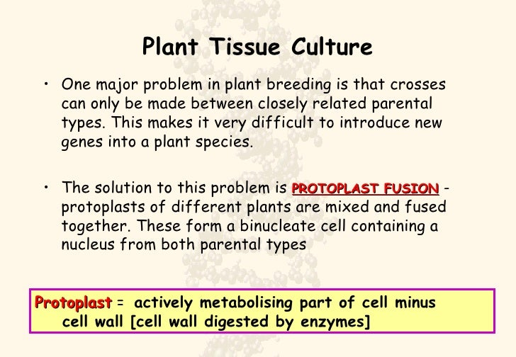 Plant Tissue Culture <ul><li>One major problem in plant breeding is that crosses can only be made between closely related ...