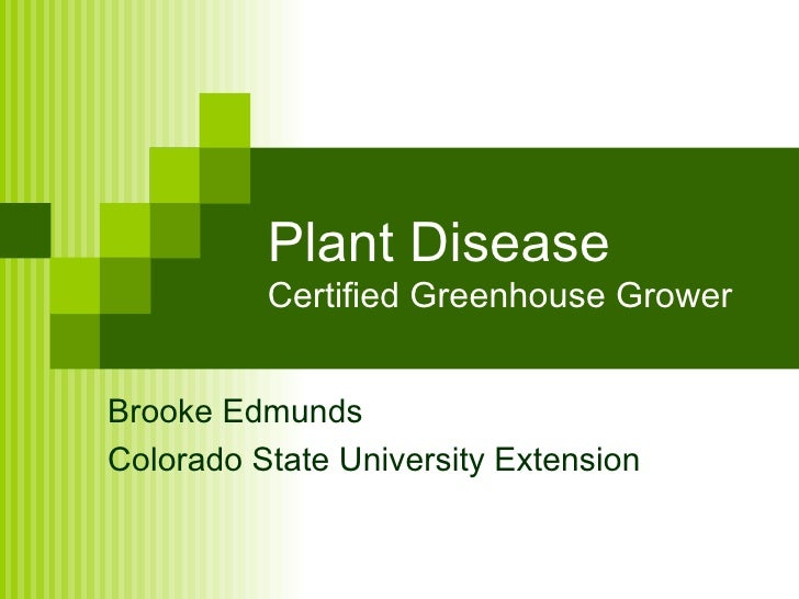 Plant Disease Certified Greenhouse Grower Brooke Edmunds Colorado State University Extension