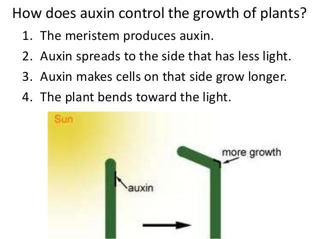 lab report on plant tropism Lm white biology search this site there are several kinds of tropism tropisms begin within thirty minutes after a plant is exposed to the stimulus and are.