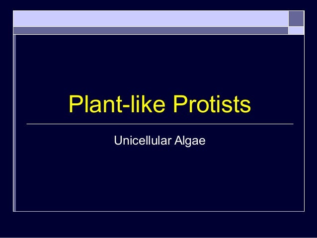 Plant-like Protists Unicellular Algae