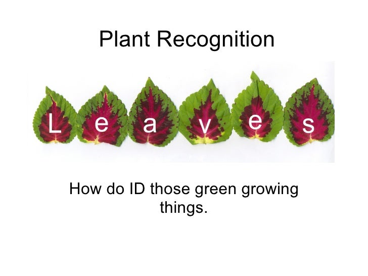 Plant Recognition How do ID those green growing things.
