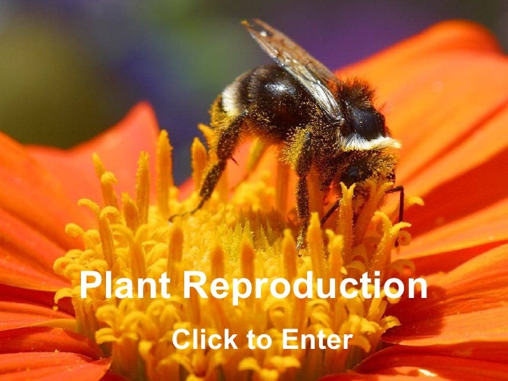 Plant Reproduction    Click to Enter                     ClickBiology