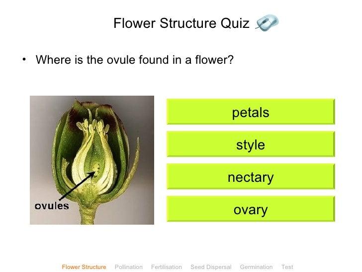 Plant reproduction flower structure quiz ccuart Choice Image