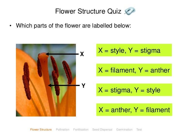 Plant reproduction flower structure quiz ccuart Images