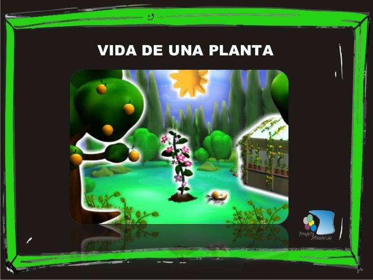 VIDA DE UNA PLANTA