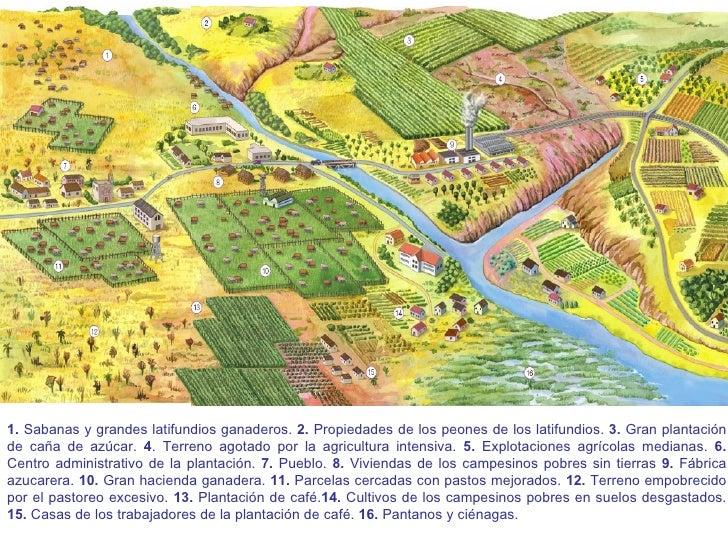 1.  Sabanas y grandes latifundios ganaderos.  2.  Propiedades de los peones de los latifundios.  3.  Gran plantación de ca...
