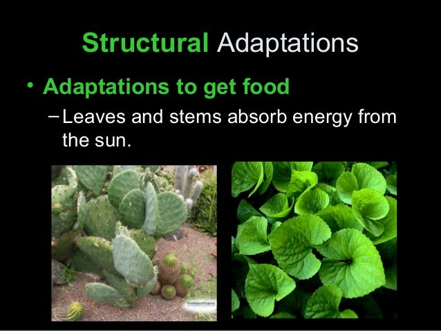 plant adaptation Identify characteristics of the desert climate and how plants have adapted to  survive interact with an educator and explore these amazing adaptations  through.