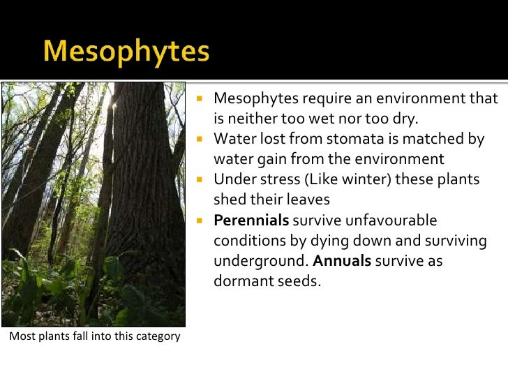 how xerophytes are adapted for water loss essay First we must clarify that xerophytes include many different plants however, a commonality amongst these plants is that they have adapted to live in environments where the loss of water through evaporation and transpiration outweigh precipitation (think of an unbalanced water cycle) root systems will vary depending on which type.