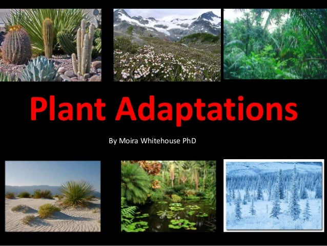 Plant Adaptations By Moira Whitehouse PhD