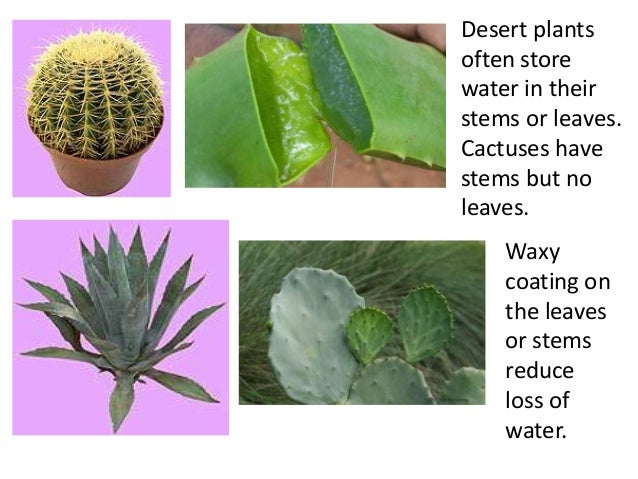 Worksheets Plant Adaptations Worksheets 5th Grade plant adaptations teach deep rootsystem or 20 next some adaptations