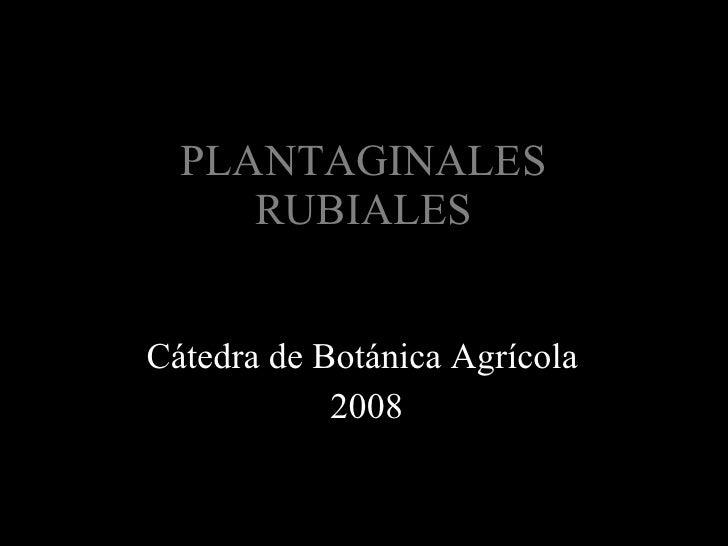 PLANTAGINALES RUBIALES Cátedra de Botánica Agrícola  2008