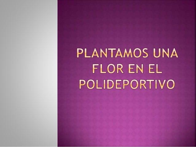 SEGUIMOS INTENTANDO MEJORAR NUESTRO MEDIO AMBIENTE Y PARA ELLO PLANTAMOS FLORES EN EL POLIDEPORTIVO. SALIMOS MUY CONTENTOS...
