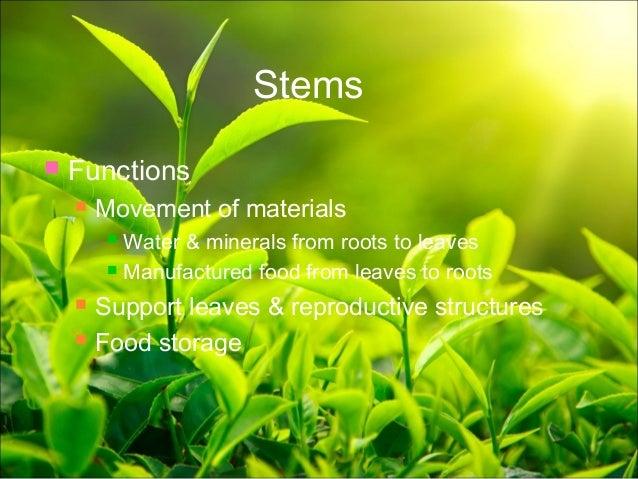 Leaf Crops; 19. & Plant anatomy presentation
