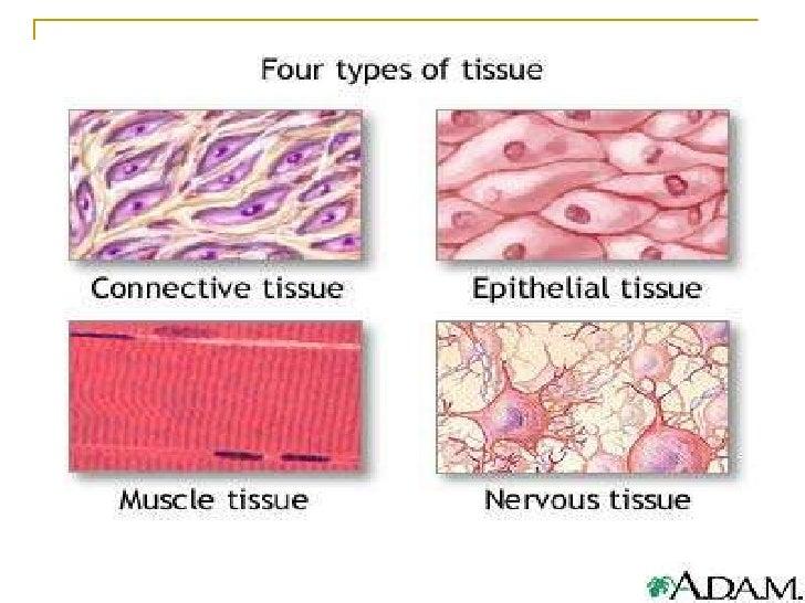 biology animal and plant tissue studies