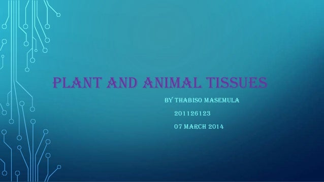 PLANT AND ANIMAL TISSUES BY THABISO MASEMULA 201126123 07 MARCH 2014