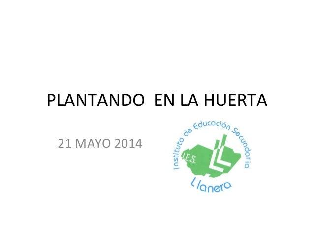 PLANTANDO EN LA HUERTA 21 MAYO 2014