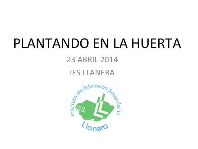 PLANTANDO EN LA HUERTA 23 ABRIL 2014 IES LLANERA